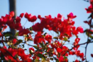 Humming with Flowers by Sageous