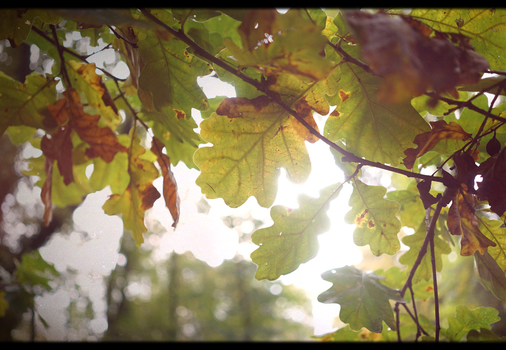 Rusty Leaves by mister-maz