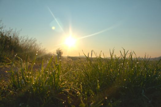 Sunrise and some grass HDR by GSonic95