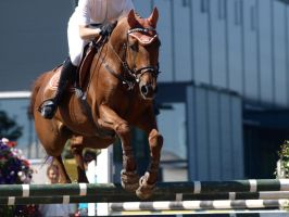 Chestnut warmblood jumping by wakedeadman