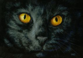 Black Cat - Part2 of Cat Eyes by nudge1