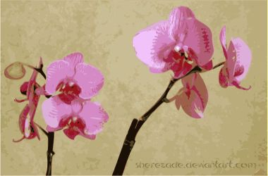 My Orchid by Sherezade