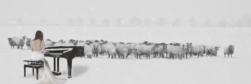 SHEEP  PIANO by FOTOSHOPIC