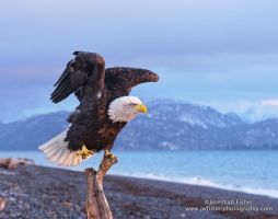 Eagle stretch by JWFisher