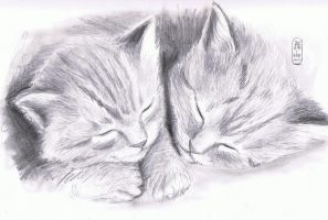 Sketchy Kittens by MyWorld1