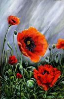 Poppies by Vinganita