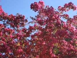 Spring Blossoms against the blue Sky by Keithzdarkside