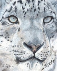 Mystic - Prismacolor Pencil by Devynn