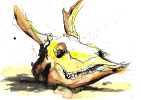 Deer Skull by AnKer-Illustration