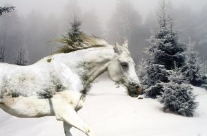 Snow Time by Sarahlou185