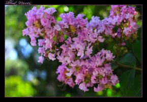 A touch of pink 2 by ShlomitMessica