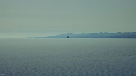 Sea of Alone by Zim2687