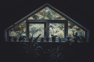 Window to the world by NRichey