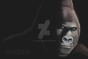 Shabani the Handsome Gorilla by jcling