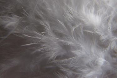 Feather III by Mifti-Stock