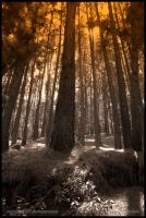Squeezing light by farcry77