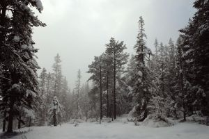 February forest 2 by Mirk-stock