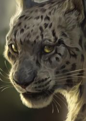 Snow Leopard by kepperoni