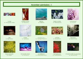 November submissions - 1 by Macro-Beginners-Club