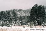 Winter Post Card I by Freestyle35mm
