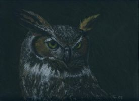 Cristian's Owl - Final - SOLD by Orchid-Black