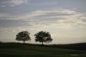 Tale of Two Trees by jmarie1210