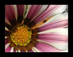 Pink And White Stripes by VioletRosePetals