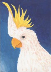 Sulfur Crested Cockatoo ATC by LuvLoz