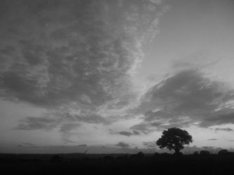 Tree At Sunset B and W by LordPhoenixCrow