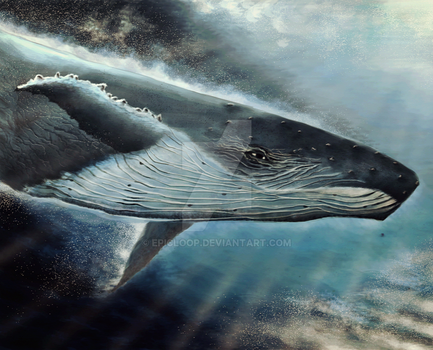Whale momentum by EpicLoop