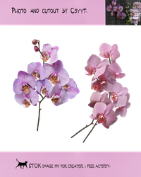 Differrent orchids2 by Csyyt