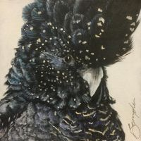 Red Tailed Black Cockatoo by Flicka02
