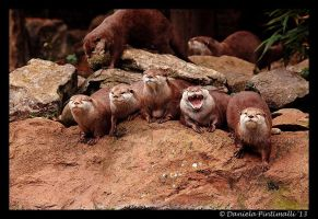Otter Group by TVD-Photography