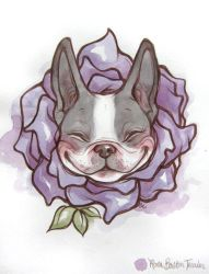 Rosa Boston Terrier by lindsaycampbell