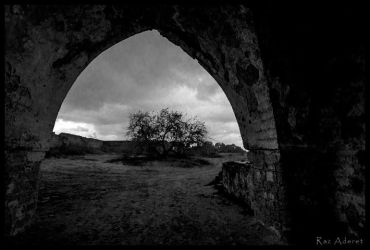 The Tree By The Arch by Aderet
