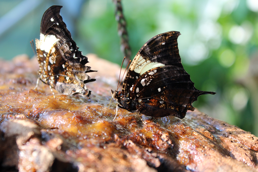 Butterfly Pics by cdristall
