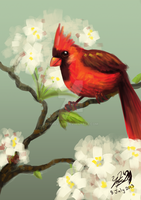 Red Cardinal by Chirpy-chi