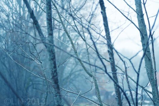 Blue forest by Misspic