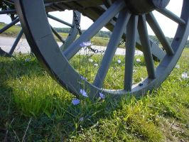Cannon Wheel and Flowers by afraudandafake