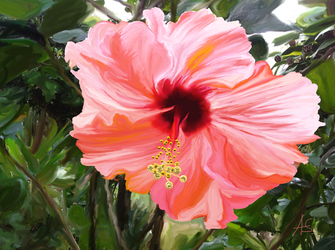 Large Hibiscus by vanndra