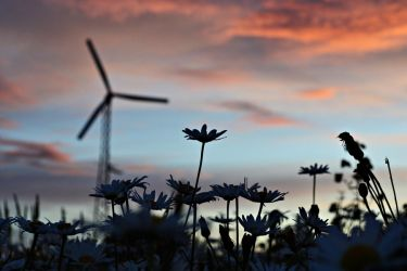 Windmills, Daisy's, and Sunsets by thepnwlife