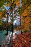 Beechy autumn by e-M-D-e