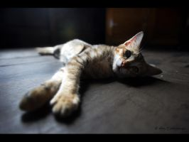 Sleepy cat by xilvan