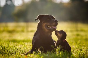 Mommy? by BlackPepperPhotos