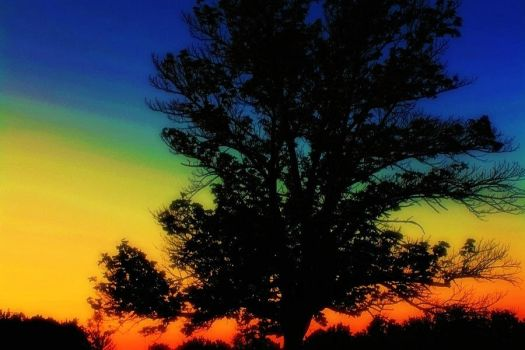 The rainbow nights by acousticrehab