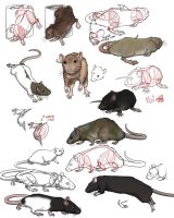 practise  on rats by SweGizmo