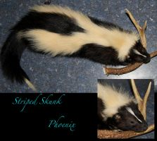 Striped Skunk SOLD by Phoenix-Cry