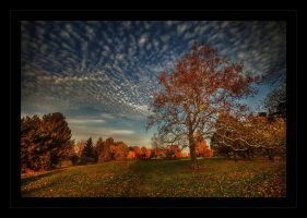 Fall Canvas.... by lowapproach