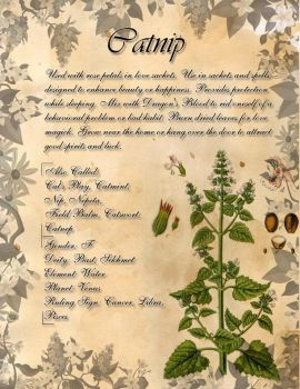 Book of Shadows: Herb Grimoire - Catnip by CoNiGMa