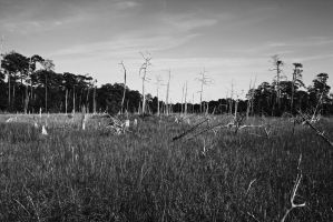 Swampy area by DonLeo85